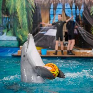 Дельфинарии, океанариумы Долгопрудного