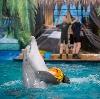 Дельфинарии, океанариумы в Долгопрудном